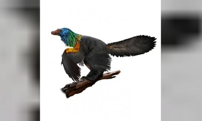 科学家们发现了1.61亿年前的彩虹恐龙