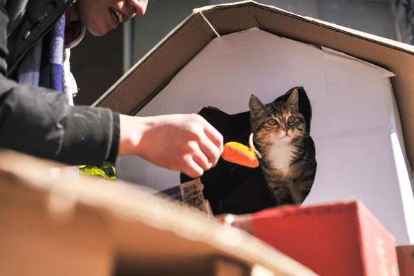 小伙用纸盒为流浪猫搭豪华别墅遮风挡雨