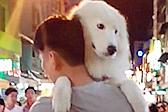 撒娇狗狗最好命!大狗被主人抱着逛街一脸宠溺