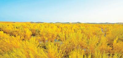 20年,硬是在沙漠中筑起11万亩生态屏障 且末探绿(美丽中国·和谐共生)