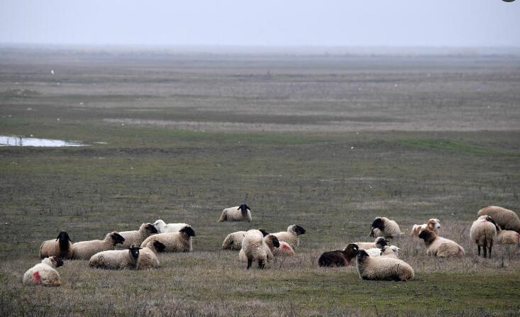 一件官司引出的故事:美驻欧防空系统防得导弹却防不了一群羊……