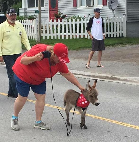 小驴遭生母抛弃被人类收养 可爱形象吸引众多粉丝