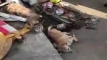 狗主人追偷狗者时将其撞死 律师表示狗主人或担刑责