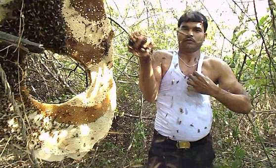 惊!印养蜂人徒手将数千只蜜蜂塞进背心