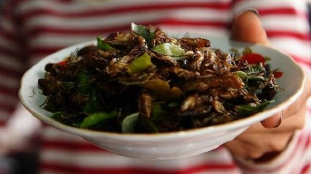 炖马蜂、炸蚂蚁、烤毛毛虫!这些虫子究竟什么味道呢?