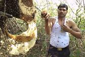 印养蜂人徒手将数千只蜜蜂塞进背心