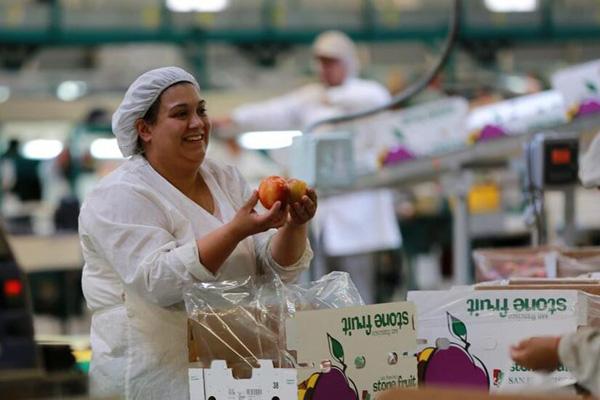智利水果出口商的中国生意经