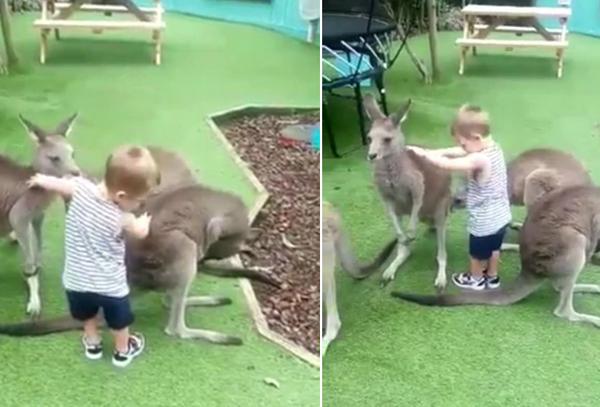 新西兰2岁儿童遭动物园袋鼠袭击 多处受伤