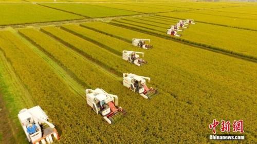 媒体:历时5年中国转基因抗虫水稻获美国食用许可
