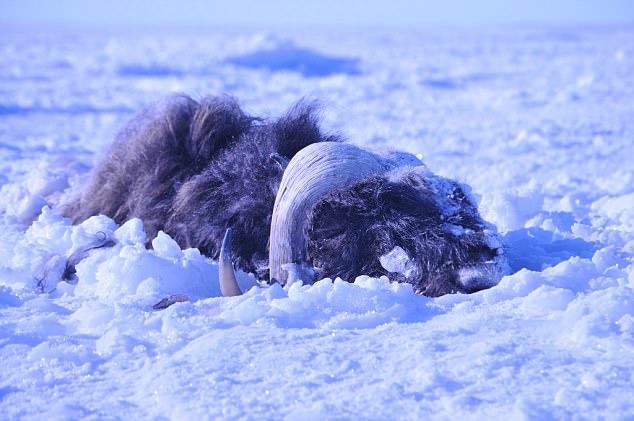 """冰海啸来袭!冰河时代""""幸存者""""危在旦夕"""