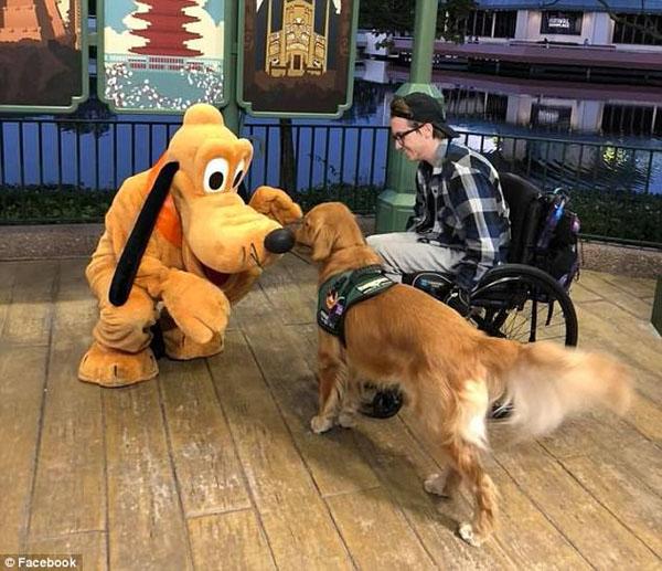 美金毛犬迪士尼偶遇最喜爱卡通人物欣喜若狂