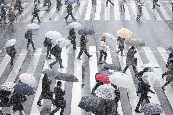 日本东京迎来大雪天气 雪花纷飞寒气逼人