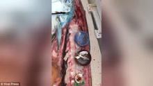 海洋垃圾太可怕!渔民捕到大鱼剖开 满腹尽是塑料瓶盖、打火机