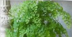 丈夫按妻子遗愿给盆栽浇水 5年后发现是塑料做的