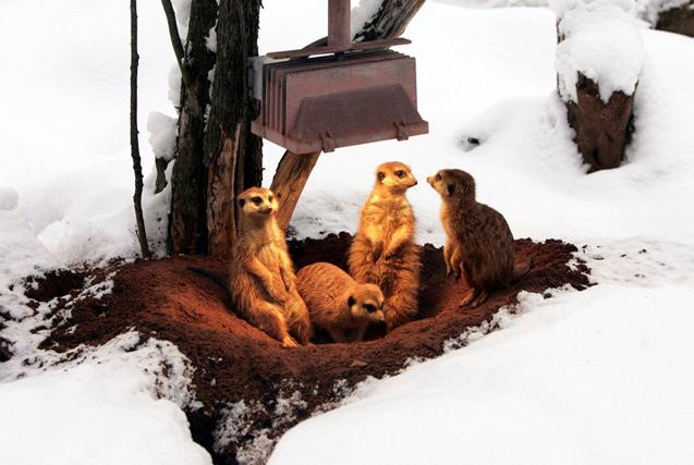 新一波寒潮来袭!小动物花式取暖萌态毕现