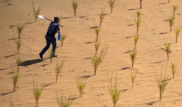 支付宝蚂蚁森林支持合种树:215KG胡杨不再是梦