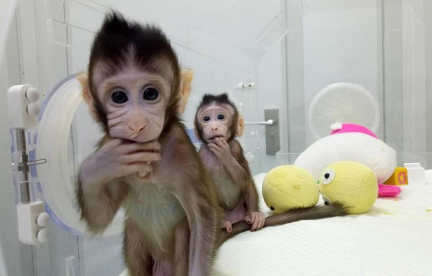 重大突破!两只克隆猴在中国诞生