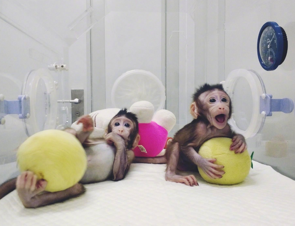 重大突破!首例体细胞克隆猴在中国诞生