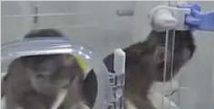 世界生命科学重大突破!两只克隆猴在中国诞生