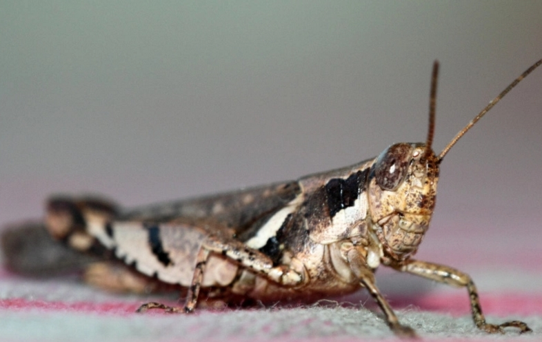 科学家:虫子应该被当做人类食物来源