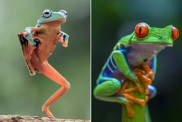 """你的""""蛙儿子""""回家了吗?看动物界佛系蛙的日常"""