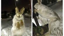 哈萨克斯坦遭遇极寒天气 室外零下56度野兔惨被冻成冰雕