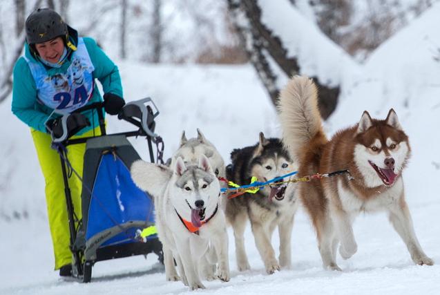 """俄罗斯举办哈士奇运动锦标赛 """"二哈""""拉雪橇奔跑"""