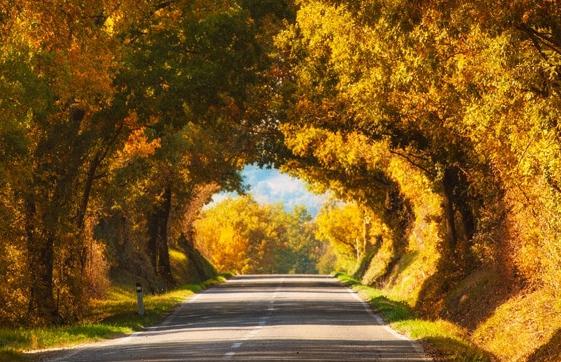 仿若仙境的天然隧道:你最想去哪个地方?