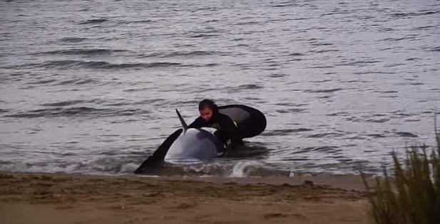 暖心时刻!倒休警察单枪匹马助搁浅海豚重返大海