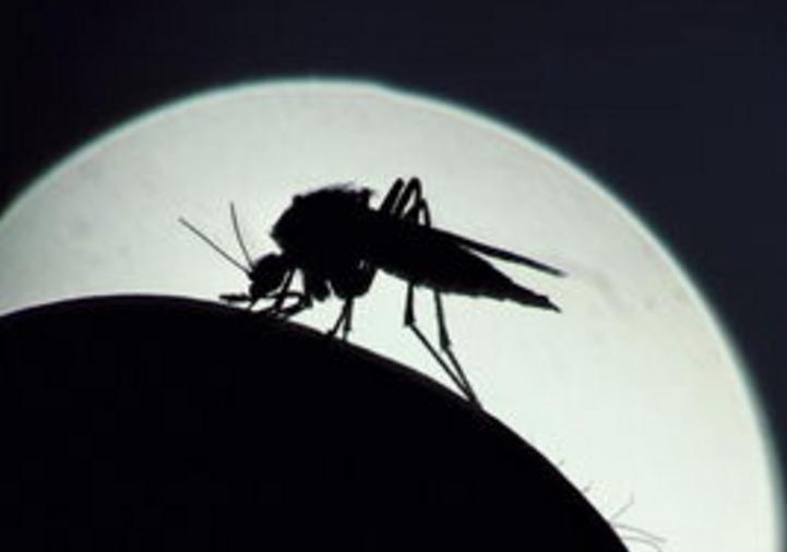 科学家首次证明:蚊子具备学习和记忆能力