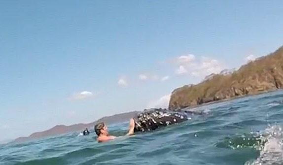 浮潜者哥斯达黎加海域与座头鲸亲密接触其乐融融