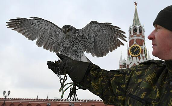 俄克里姆林宫探讨训练鹞鹰捕获无人机的可能性