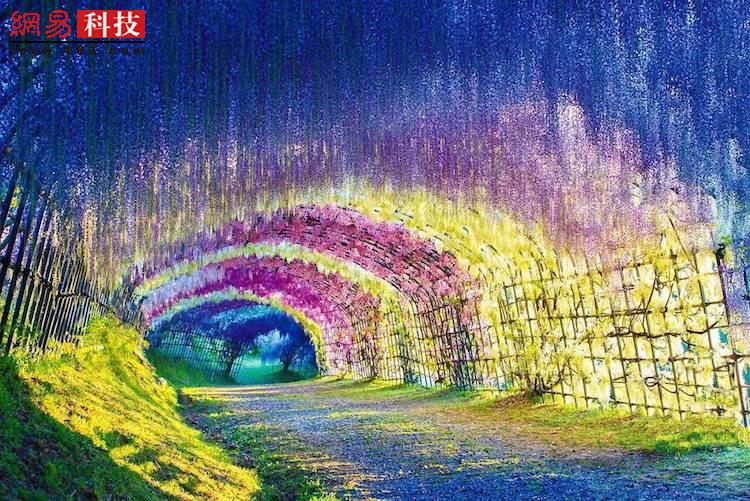 这些童话般的天然隧道分布在世界各地。在日本的河内富士花园,紫藤树沿着小径排列,走在其间,头顶是鲜艳的蓝色、紫红和黄色,美到让人窒息。