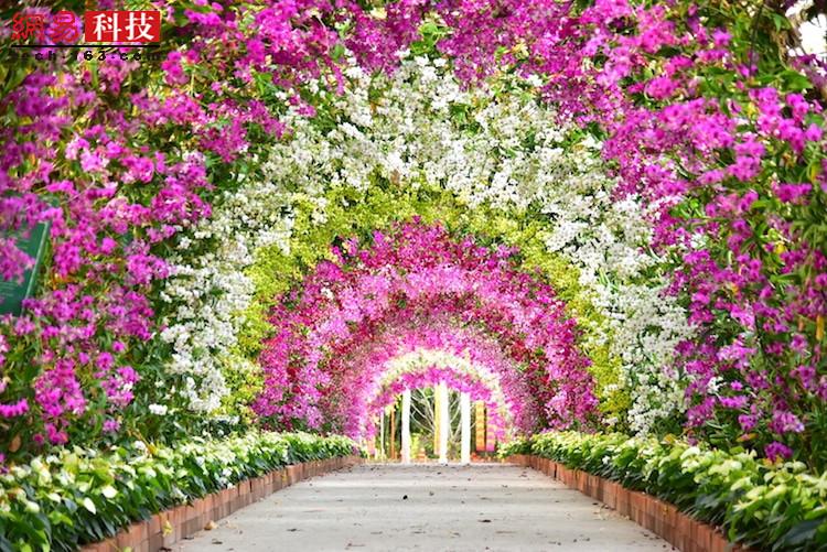 盛放的兰花形成一道道拱门。