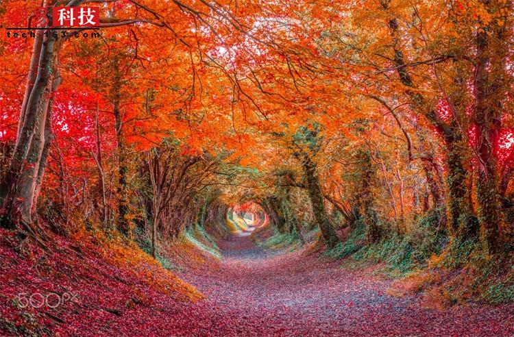 秋季的森林隧道,走在里面,不知是否有小精灵躲在树后。