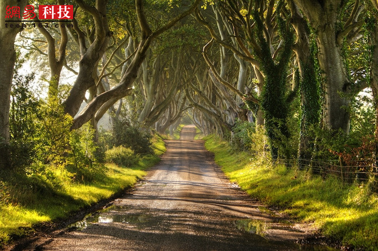 """三百多年历史的老树耸立在道路两侧。这里拥有一个散发着恐怖气息的名字---- """"黑暗树篱""""。夜里是否会曾有惊悚的老巫现身?(惜辰)"""