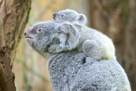 動物爸媽帶娃日常:家有熊孩子暖萌又鬧心