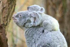 动物爸妈带娃日常:家有熊孩子暖萌又闹心