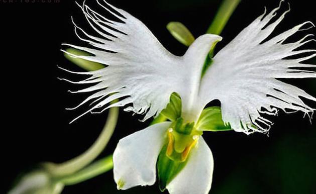 大自然中那些令人目瞪口呆的奇葩花朵!