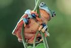 动物界佛系蛙儿子的日常
