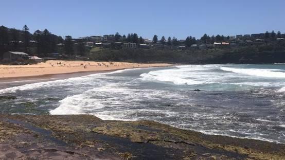 悉尼兩海灘驚現數百萬蛆蟲 當地政府關閉整頓