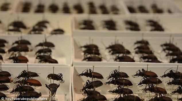 研究:全球变暖导致加拿大甲虫体型缩小