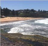 悉尼两海滩惊现数百万蛆虫 当地政府关闭整顿