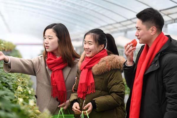 浙江建德:草莓小镇红红火火引客来