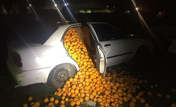 橙子大盗!西班牙男子轿车偷运4吨橙子被抓获