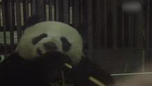 20名小主持齐聚熊猫基地 开启天府文化采风之旅