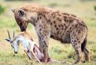 摄影师捕捉动物兽生百态