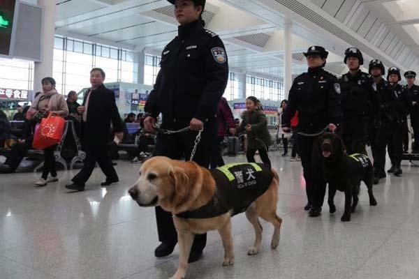 广西铁路公安警犬日巡逻2万步 每天喷药保护关节