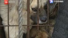 拿去屠宰的狗被拦截下来 卖狗者:还不是因为你们想吃!