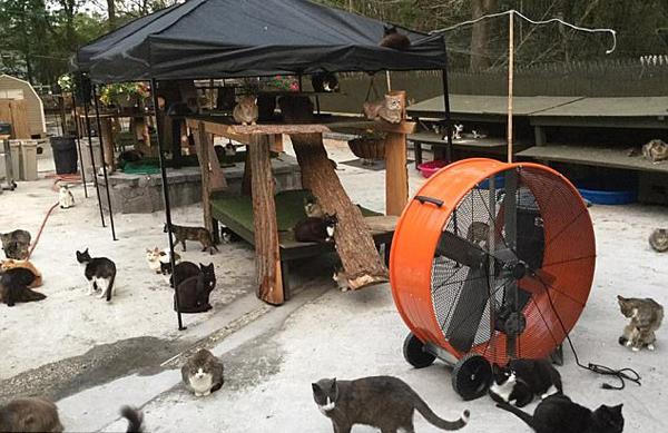 暖心!美动物爱好者把自家建成300只猫的庇护所